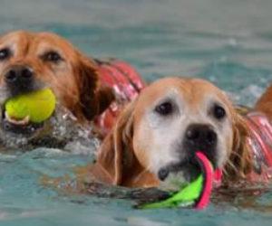 dog-swim-2-optimized