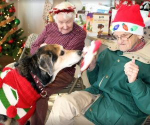 senior-dogs-senior-citizen-program